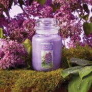 lilac blossoms purple candles in garden image number 1