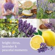 lemon lavender large tumbler candle banner image number 2
