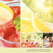 ripe berries, sweet lemon and the perfect patio companion text on photo collage with picnic setting image number 2