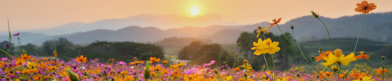 evening mountain scenery