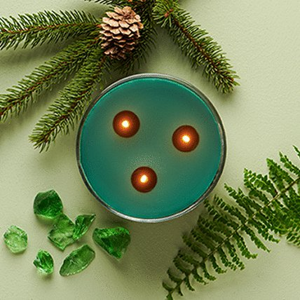3 wick candle with decorative leaves